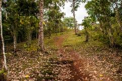 Traînée dans une forêt image stock