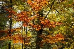 Traînée dans une forêt pendant l'automne Photographie stock