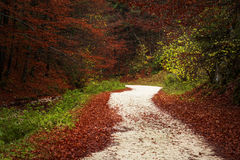 Traînée dans une forêt pendant l'automne Image stock