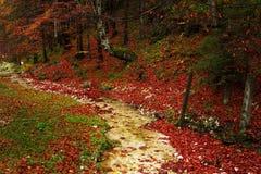 Traînée dans une forêt pendant l'automne Photo stock