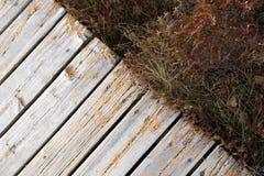 Traînée de conseil avec la végétation de marais dans un espace de copie de parc photos libres de droits