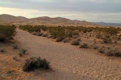 Traînée de dunes de Kelso Photos stock