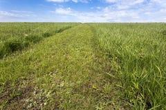 Traînée de Flint Hills dans l'herbe verte Photographie stock