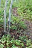 Traînée de forêt de Taiga garnie des fleurs de Bunchberry Image libre de droits