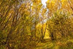 Traînée de forêt en automne Photographie stock