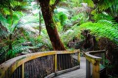 Traînée de forêt tropicale de repos de Maits sur la grande route d'océan, Australie Photo libre de droits