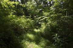 Traînée de jeu par la forêt images libres de droits