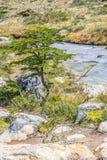 Traînée de Laguna Esmeralda avec le petits arbre et courant Photo stock