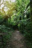 Traînée de marche dans la forêt Photos libres de droits