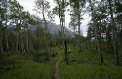 Traînée de Minnewanka de lac Image stock