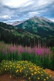 Traînée de montagne 403 photo libre de droits