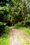 Traînée de montagne dans les bois Photo stock