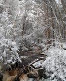 Traînée de parc d'état de Blackwater avec la neige et la glace Images libres de droits