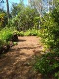 Traînée de parc de la Floride Photo stock