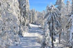 Traînée de pays croisé d'hiver Photo libre de droits