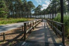 Traînée de recyclage ou de marche dans le pari en bois de passage couvert de forêt verte Photo stock