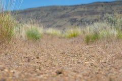 Traînée de saleté dans le désert photo stock