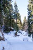 Traînée de ski pendant l'hiver les arbres images libres de droits