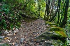 Traînée de trekking dans la jungle au camp de base d'Annapurna, Pokhara, Ne photo libre de droits