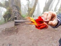 Traînée de trekking de volcan d'Acatenango, Guatemala Images stock