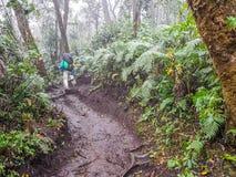 Traînée de trekking de volcan d'Acatenango, Guatemala photo libre de droits