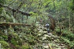 Traînée dure de manière dans les Alpes japonais