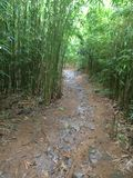 Traînée en bambou de forêt Photo stock