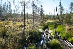 Traînée en bois de forêt sur le marais Image libre de droits