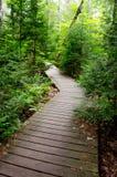 Traînée en bois par une forêt épaisse Photographie stock libre de droits