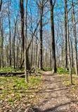 Traînée entre les arbres Photographie stock libre de droits