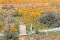 Traînée entre sauvage aux fleurs chez Skilpad photo libre de droits