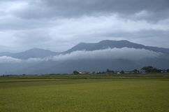 Traînée faisante du vélo de gisement de riz de Chishang Photos stock
