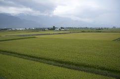 Traînée faisante du vélo de gisement de riz de Chishang Photographie stock