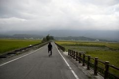 Traînée faisante du vélo de gisement de riz de Chishang Image libre de droits