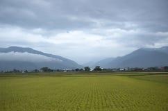 Traînée faisante du vélo de gisement de riz de Chishang Image stock
