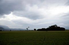 Traînée faisante du vélo de gisement de riz de Chishang Photo libre de droits