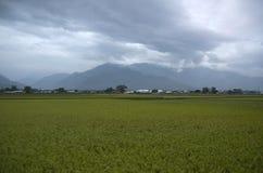 Traînée faisante du vélo de gisement de riz de Chishang Photographie stock libre de droits