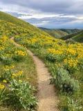 Traînée faisante du vélo de montagne de Boise, Idaho Images libres de droits