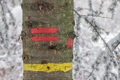 Traînée jaune et rouge de rayure sur un arbre Photos libres de droits