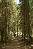 Traînée par la forêt Photos stock