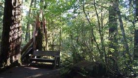 Traînée par le coverd d'arbres avec de la mousse Photographie stock libre de droits