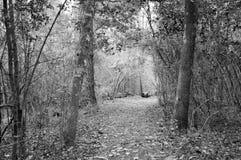 Traînée par une forêt Photos stock