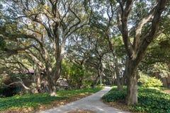 Traînée pavée alignée avec de vieux arbres de chêne vivant Image stock