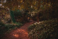 Traînée rouge à l'intérieur de la forêt de villa Gesell photo stock