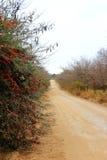 Traînée rurale Photographie stock