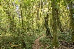 Traînée tropicale de forêt image libre de droits
