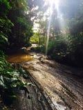 Traînée tropicale rocailleuse de jungle vers le bas à la vallée de Waipi'o sur la grande île d'Hawaï Images libres de droits