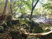 Traînée tropicale rocailleuse de jungle vers le bas à la vallée de Waipi'o sur la grande île d'Hawaï Photographie stock