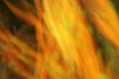 Traînées brouillées de lumière - beauté de fond Image libre de droits