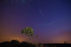 Traînées d'étoile la nuit et arbre dans le premier plan peint avec la lumière Images stock